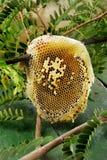 Beehive Stock Photos