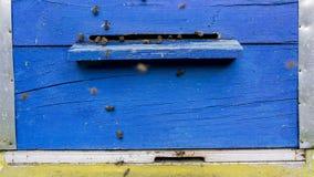 Beehive Stock Photo