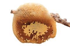 Beehive closeup. Stock Photos