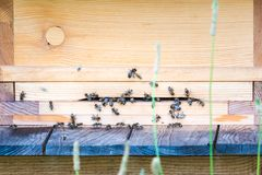 Beehive entrance with active manny honey bees royalty free stock images
