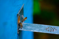 Beehive entrance and bee royalty free stock photos