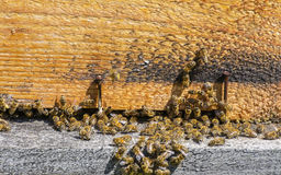 Beehive entrance royalty free stock photos