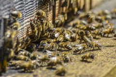 Beehive entrance Stock Photography