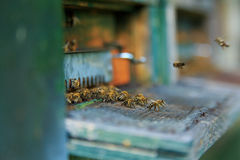 Beehive entrance Royalty Free Stock Photography