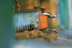 Beehive entrance Stock Photos