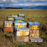 Beehive farm box Royalty Free Stock Image