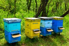Beehive in a forest Royalty Free Stock Photo
