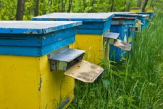 Beehive in a forest Stock Photography