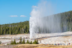 Beehive geyser erupting in Yellowstone stock images