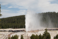Beehive Geyser eruption in Yellowstone National Park Stock Photo
