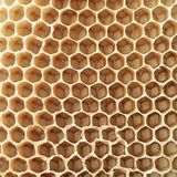 Beehive hexagons. The art of geometry is produced by the work of thousands of bees producing the beehive wax that honey is stock photo