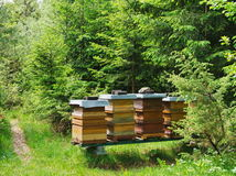 Beehive hidden in the forest Royalty Free Stock Photo