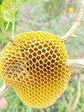 Beehive Royalty Free Stock Photo