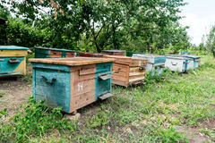 Beehive - the house of bees in the bosom of nature. Work beekeeper. Healing product of beekeeping. May, flower honey. Beehive - the house of bees in the bosom stock images