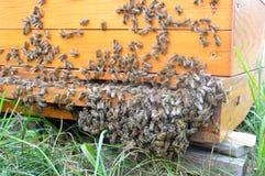 Beehive inlet Stock Photo