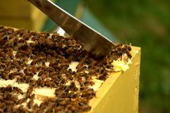 Beehive inspection Royalty Free Stock Image