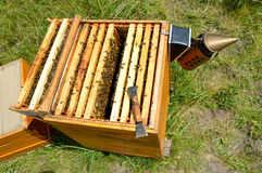 Beehive inspection. Langstroth beehive inspection with chisel and smoker Stock Photography