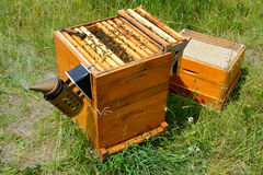 Beehive inspection Royalty Free Stock Photography