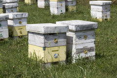 Beehive. Meadow with beehives high in the mountains stock image