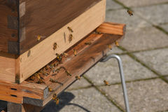 Beehive on rooftop in Toronto city Stock Photo