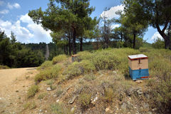A beehive in Seih Sou Royalty Free Stock Photography