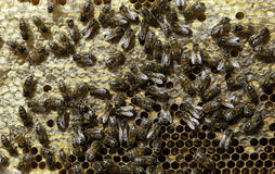 Beehive Stock Photography