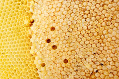 Beehive texture Royalty Free Stock Images