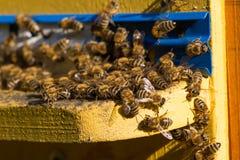 beehive Tiro macro das abelhas que pululam em um favo de mel Imagem de Stock Royalty Free