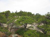 Beehive Trail, Acadia National Park, Main Stock Photo