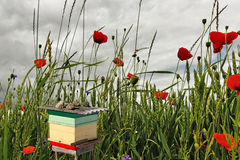 Beehive on the field. Stock Photography