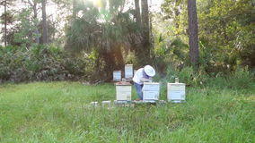 Beehive Wide Slow Motion stock video footage
