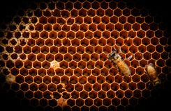The beehive Stock Photo