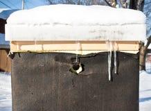 Beehive in winter Stock Photo