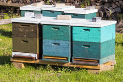 Beehive wooden boxes in green grass Royalty Free Stock Image