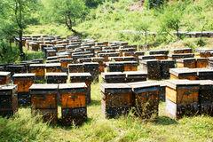 Beehive and working bees Stock Photo