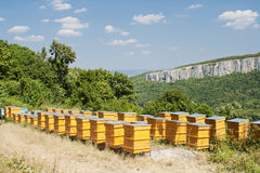 Free Beehives Stock Photo - 10646150