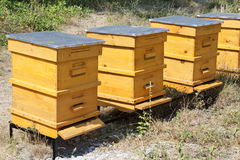 Beehives. Three yellow beehives in garden royalty free stock image