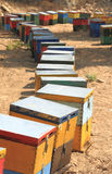 Beehives. Colored artificial beehives made of wood stock photography