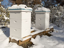 Free Beehives Royalty Free Stock Images - 36845859