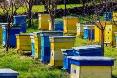 beehives Imagens de Stock