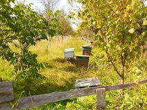 beehives Imagem de Stock Royalty Free