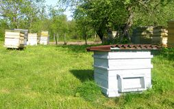Beehives. Group of beehives in green field stock photography