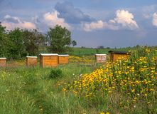 Beehives. Wooden beehives in the summer royalty free stock photo