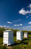 Beehives. Three white wooden beehives in a row on a bright clear sunny day Royalty Free Stock Photo