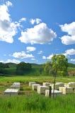 Beehives Royalty Free Stock Photo