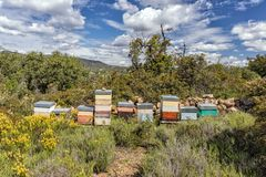 Beehives in the Algarve, Portugal. Beehives used for small scale honey production amongst the wild vegetation in the Algarve, Portugal stock images