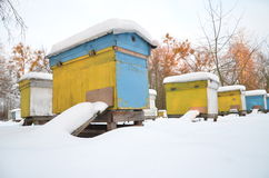Beehives in apiary covered with snow Stock Image