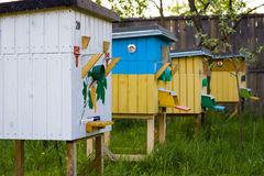 Beehives in the apiary in summer Royalty Free Stock Image