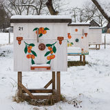 Beehives in the apiary in winter close-up Royalty Free Stock Image