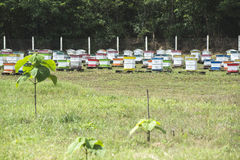 Beehives in bee farm Royalty Free Stock Photos